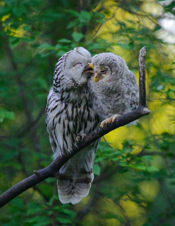 Elternliebe im Vogelreich, Mama und Baby, süße Tierbilder, niedliche Tierbabys mit ihren Eltern