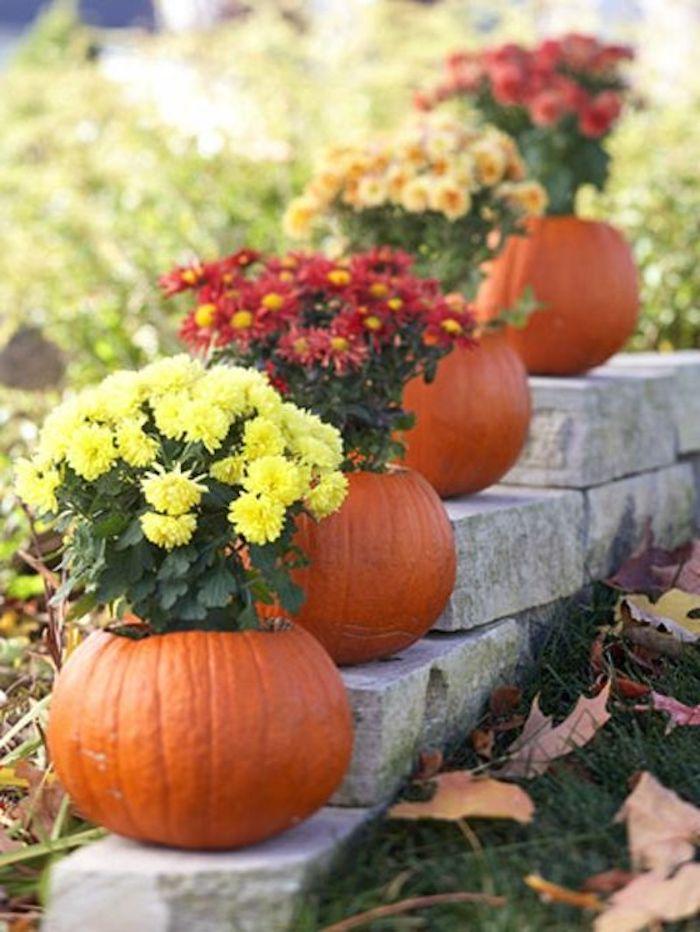 vier Kürbisse, die man als Blumentöpfe benutzen kann - Halloween basteln