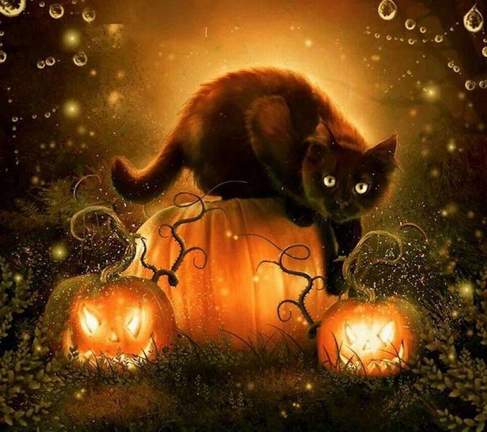 eine schwarze Katze und drei Kürbisse Spinnennetz mit Wassertropfen - Bilder Halloween