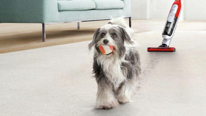 ein hund und der tolle handsstaubsauger athlet properform