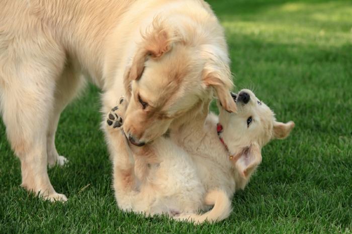 süßes Hundebaby spielt mit seiner Mutter, schöne Tierbilder, niedliche Tierbabys mit Eltern