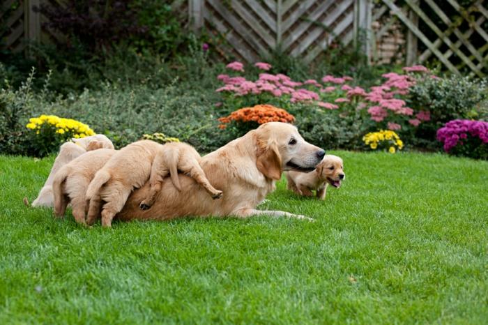 süße Hundebabys spielen mit ihrer Mutter im Garten, Mutterliebe im Tierreich, schöne Bilder