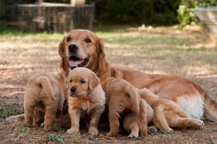 süße Hundebabys spielen mi ihrer Mutter, niedliche Tierbabys mit ihren Eltern- fantastische Bilder