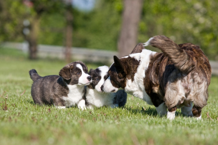 zwei süße Hundebabys und ihre Mutter, niedliche Tierbabys, Mutterliebe im Tierreich