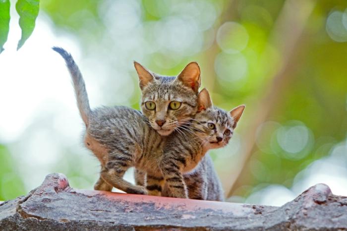 Die süßesten Tierbabys der Welt, Katzenbaby mit seiner Mutter, süße Tierbilder