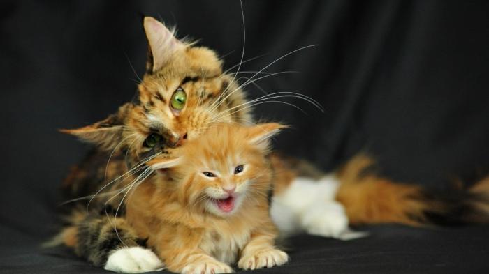 süßes Katzenbaby und seine Mutter, niedliche Tierbilder, Mutterliebe im Tierreich
