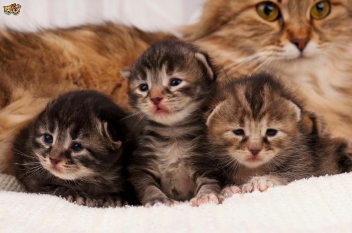 Die süßesten Tierbabys der Welt, drei niedliche Katzenbabys und ihre Mutter, Mutterliebe im Tierreich