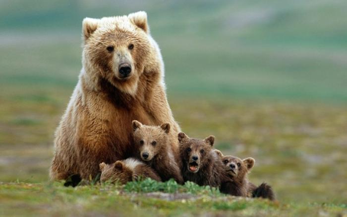 Mama Bär mit vier Kindern, die süßesten Tierbabys der Welt, fantastische Tierbilder