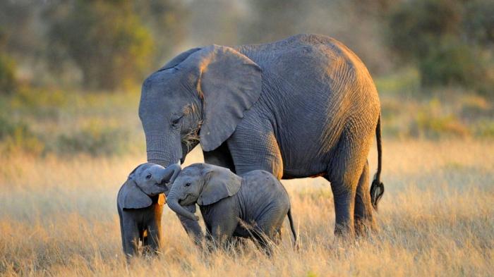 Elefanten, Mutter mit zwei Kindern, die süßesten Tierbabys der Welt mit ihren Eltern