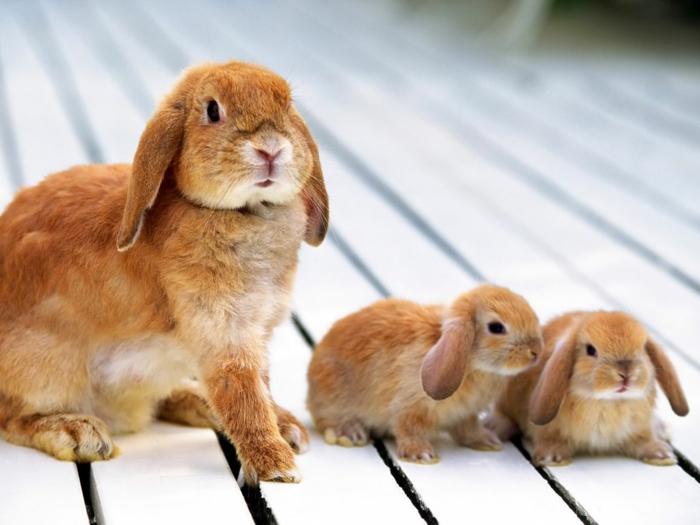 Hasenfamilie, Mutter mit zwei Babys, die süßesten Tierbabys der Welt und ihre Eltern