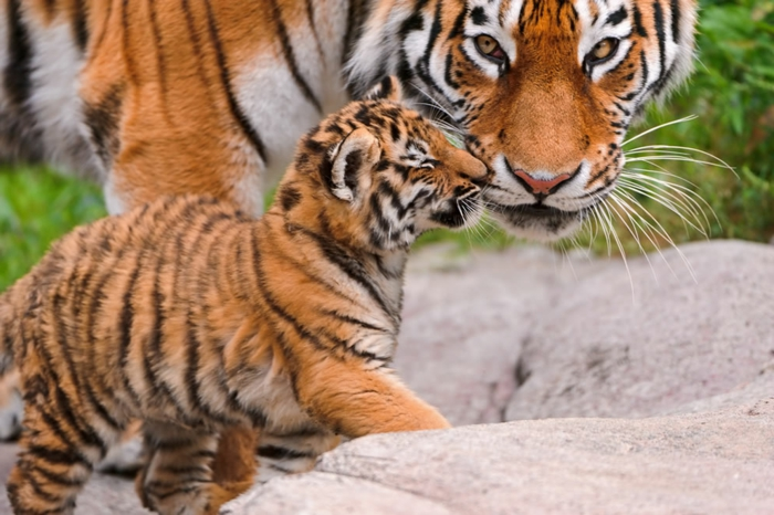 die süßesten Tierbabys der Welt, interessante Fakten und zahlreiche Bilder, Mutterliebe im Tierreich