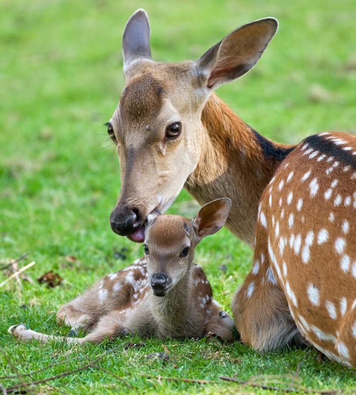 niedliche Tiere, interessante Fakten und fantastische Bilder, Mutterliebe in der Tierwelt