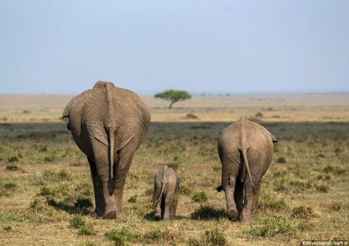 Elefantenfamilie, Eltern mit ihrem Kind, die Tierwelt näher kennenlernen, interessante Fakten und fantastische Bilder