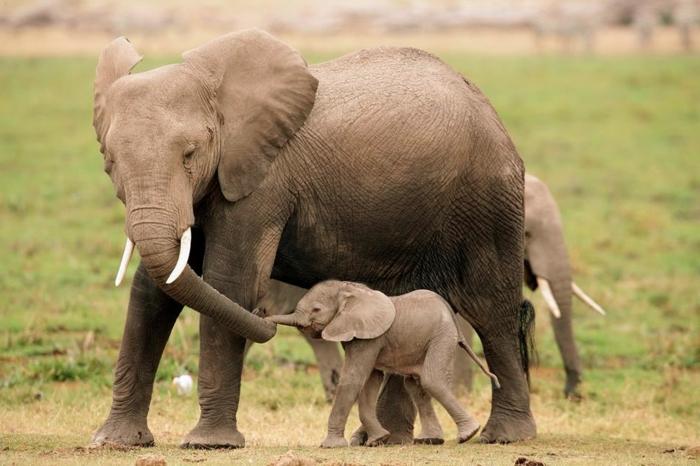 Mutter und Baby Elefanten, die Wildtiere näher kennenlernen, die Natur genießen
