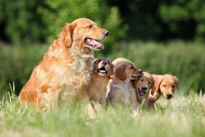 Hundebabys spielen mit ihrer Mutter, die süßesten Tierbabys und ihre Eltern, fantastische Bilder