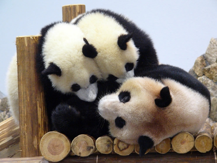 Mutter Panda mit Zwillingen, die süßesten Tiere der Welt- zahlreiche Bilder, Tierwelt