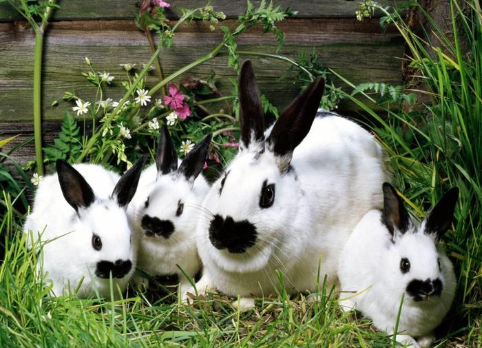 süße Hasenfamilie, Mutter mit drei Kindern, Bilder von den süßesten Tieren der Welt