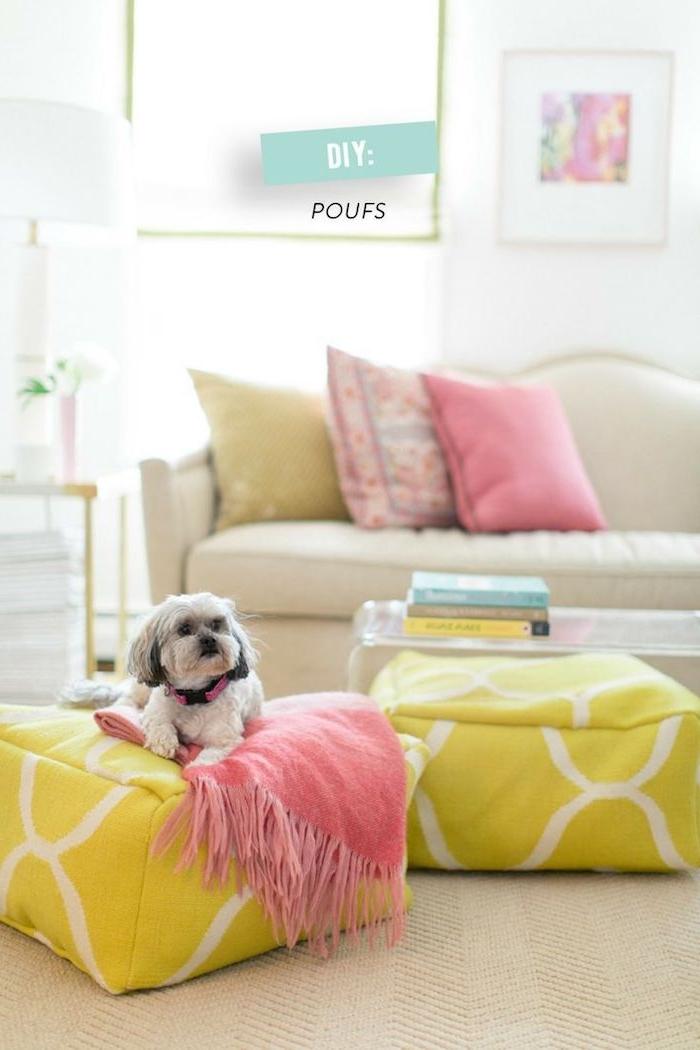 niedliches hund hündchen zu hause liebevolle atmosphäre frische farben möbel grün rosa weiß