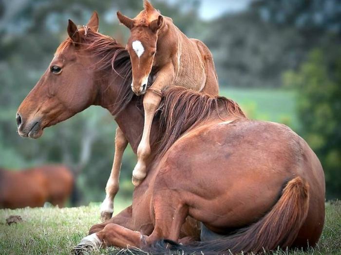 Mutter und Baby Pferden, niedliche Tierbabys mit ihren Eltern, die Tierwelt näher kennenlernen