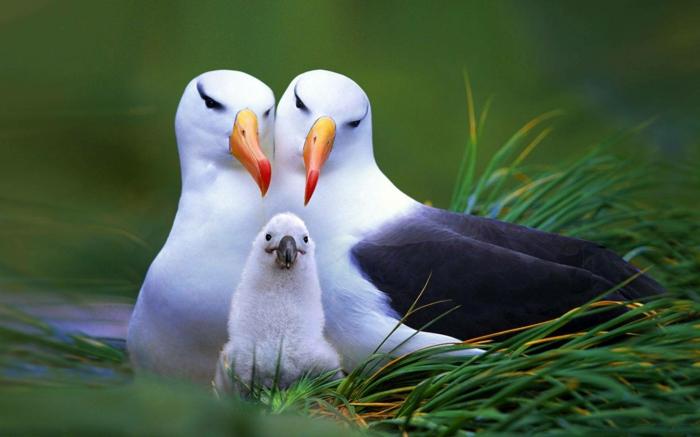 Eltern mit ihrem Baby, die Vogelwelt näher kennenlernen, schöne Bilder von niedlichen Tieren