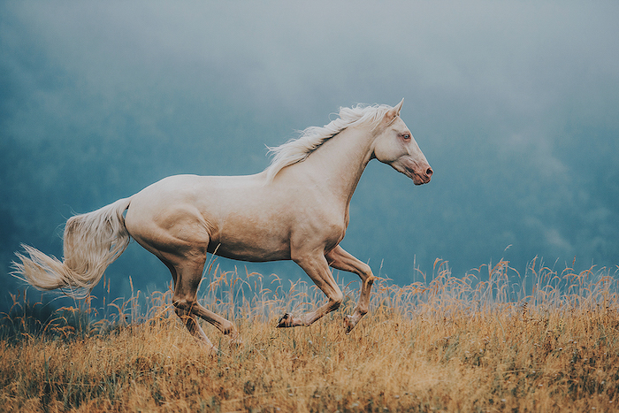 zum thema pferdesprüche und pferdebilder - hier ist ein laufendes pferd mit einem weißen schwanz und einer weißen dichten mähne