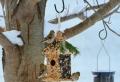 Nistkasten selber bauen – DIY Projekte für Kinder und Erwachsene