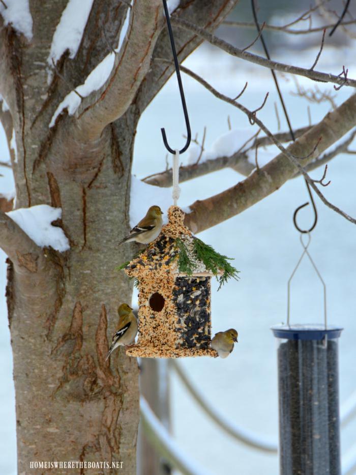 Futterhaus aus Holz für Vögel, mit Samen und Sonnenblumenkernen bekleben, drei kleine Sperlinge, Schnee auf den Zweigen