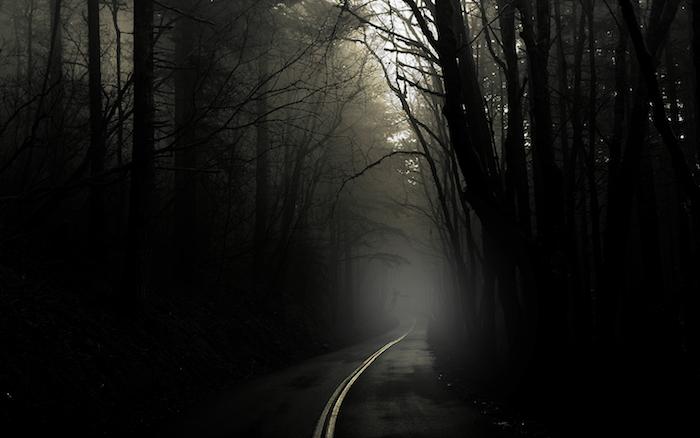 ein wald mit vielen schwarzen bäumen und nebel und ein weg - idee zum thema traurige bilder zum weinen