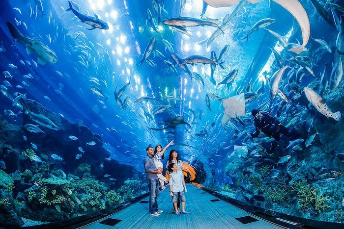 wo liegt dubai aquarium in dubai mall familie mit zwei kindern geht spazieren und besichtigt die sehenswürdigkeiten von dubai