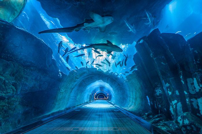 wo liegt dubai aquarium haifische schöne meeresaussichten meerestiere schwimmen rund herum