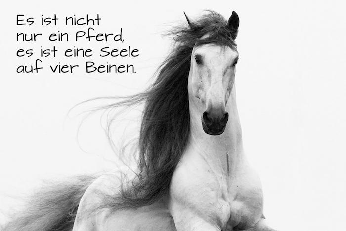 noch eine idee zum thema pferdesprüche und pferdebilder - hier ist ein weißes, großes, wildes pferd mit schwarzen augen und einer schwarzen dichten mähne und ein pferdesppruch zum nachdenken