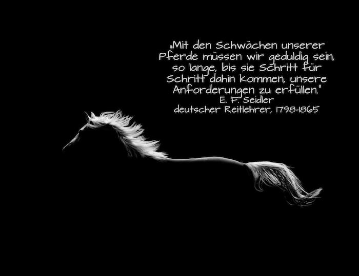das ist ein bild mit einem laufenden schwarzen pferd mit einem weißen schwanz und mit einer dichten weißen mähne - pferdesprüche und pferdebilder