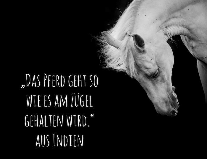jetzt zeigen wir ihnen ein bild mit einem weißen pferd mit schwarzen augen und mit einer dichten, weißen mähne und mit einer idee zum thema pferdesprüche und pferdebilder