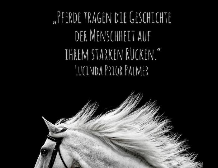 hier ist ein kurzer pferdespruch und ein zitat von lucinda prior palmer und ein bild mit einem wilden, weißen pferd mit einer weißen mähne und schwarzen augen