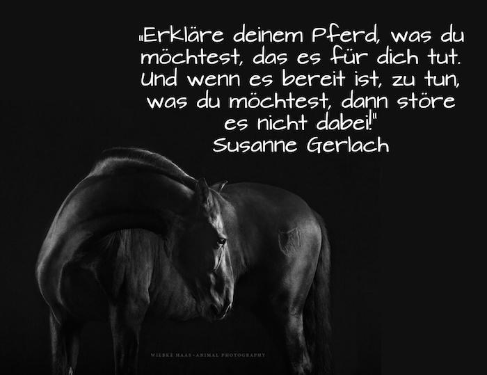 jetzt zeigen wir ihnen ein bild mit einem großen schwarzen pferd mit einer schwarzen mähne und schwarzen augen, idee zum thema pferdebilder mit schönen pferdesprüchen zum nachdenken