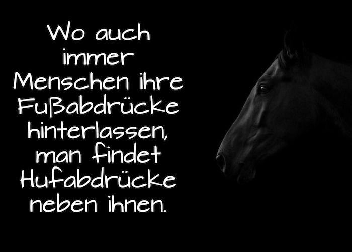 pferdesprüche vertrauen, hier ist ein pferdebild mit einem schwarzen pferd mit schwarzen augen und mit einem tollen kurzen pferdespruch zum nachdenken
