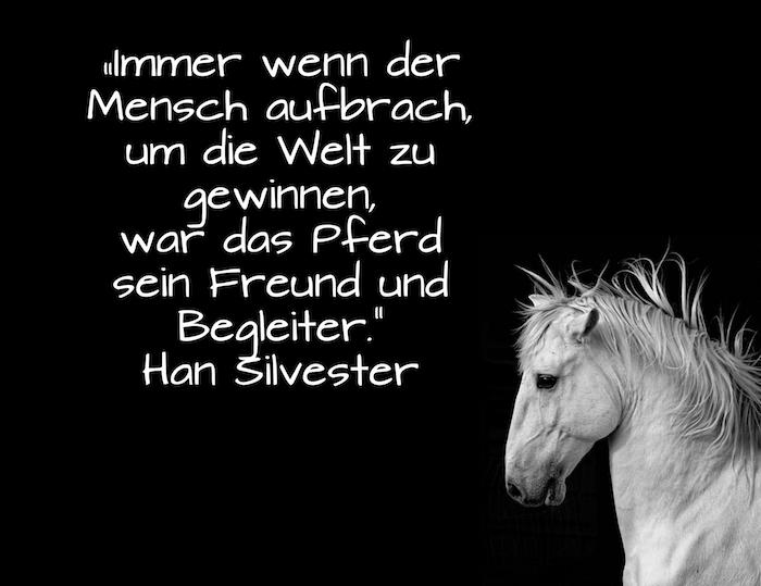 inspirierende pferdesprüche und pferdebilder - hier ist ein bild mit einem kleinen, weißen pferd mit einer weißen, dichten mähne und mit schwarzen augen