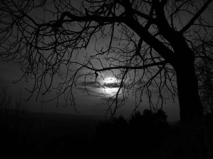 der blaue mond in der nacht und ein baum - ein sehr trauriges bild zum weinen
