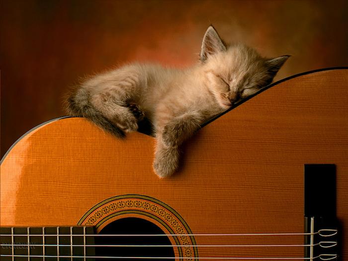 sehr kleine graue süße schlafende katze mit einer kleinen pinken nase und eine große orange gittare - lustige bilder gute nacht