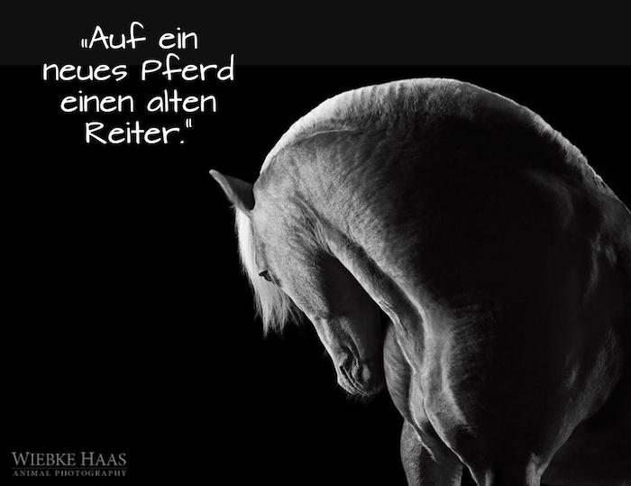 auf ein neues Pferd einen alten reiter - ein pferdespruch und ein pferdebild mit einem weißen wilden pferd mit schwarzen augen und mit einer weißen mähne