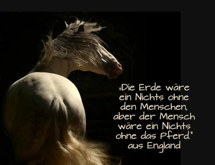 werfen sie einen blick auf dieses pferdebild mit einem kurzen spruch zum thema pferde und mit einem wilden weißen pferd mit einer dichten schwarzen mähne und schwarzen augen
