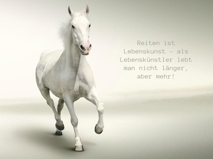 jetzt zeigen wir ihnen pferdebild mit einem weißen pferd mit schwarzen augen und einer dichten weißen mähne und mit einem kurzen pferdespruch zum nachdenken