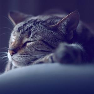 Wir zeigen Ihnen die besten Gute Nacht Bilder und Gute Nacht Sprüche!