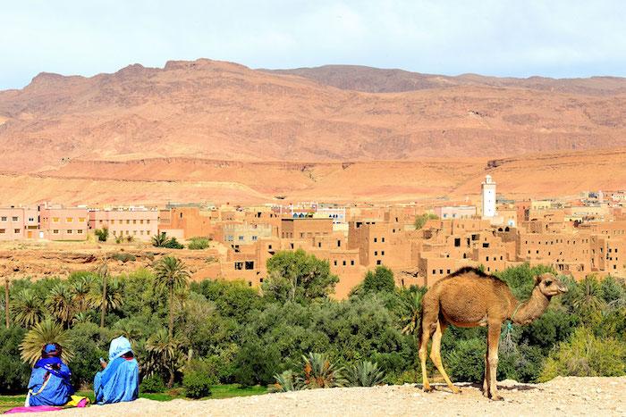 marokko hauptstadt reise safari kamele beduinen wüste die schöne gebäude von marokko
