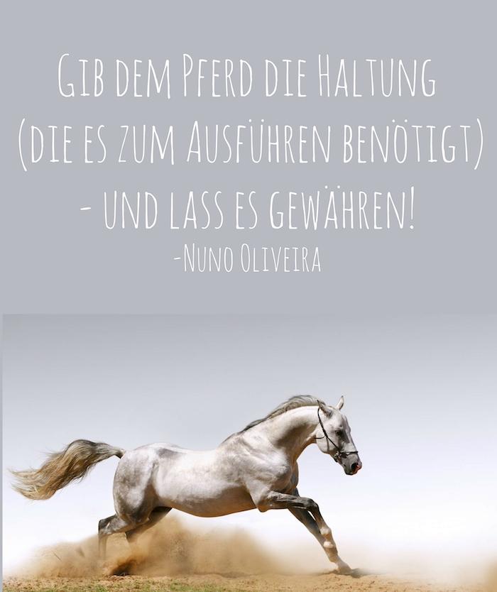 pferdesprüche und pferdebilder - hier finden sie ein weißes pferd im sprung und mit schwarzen augen und einer grauen langen mähne und ein zitat von nuno oliveira