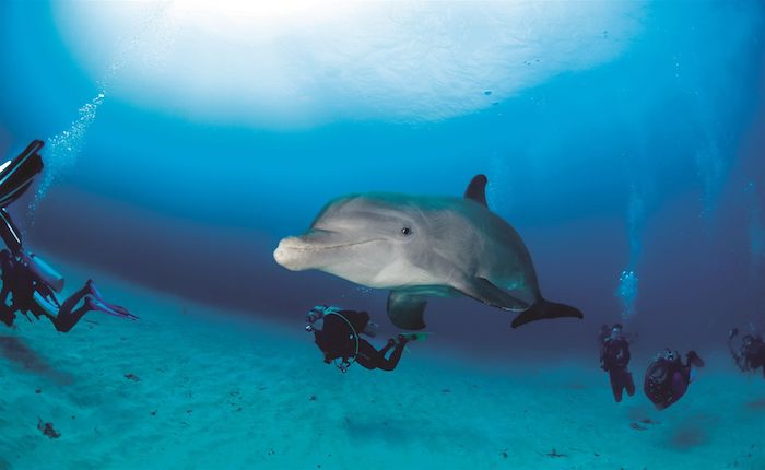 jetzt zeigen wir ihnen ein bild mit einigen schwimmenden menschen und einem großen grauen und schwimmenden delfin und einem blauen wasser - tolle idee zum thema delfine bilder