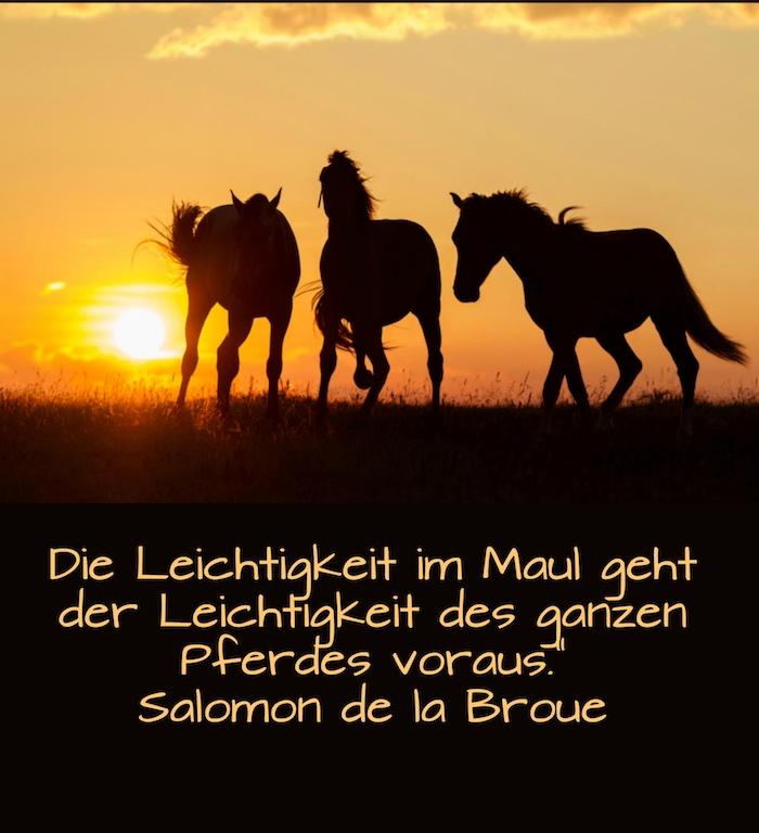 dre schwarze wilde pferde mit schwarzen mähnen im sonnenuntergang, ein himmel mit einer gelben sonne und wolken, pferdebild mit pferdespruch