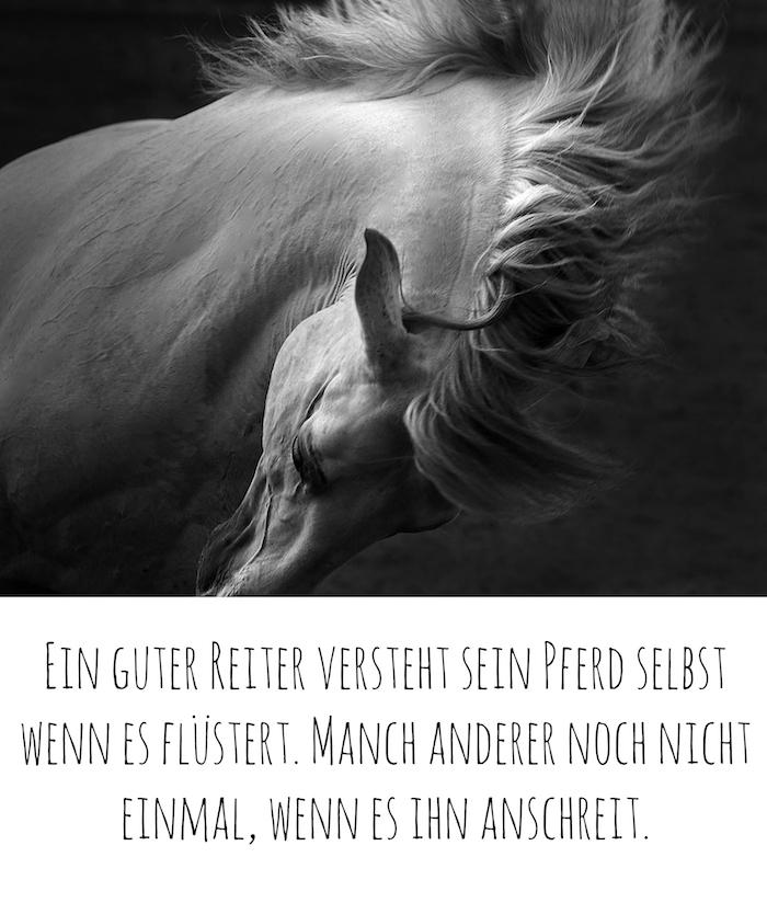 hier finden sie ein bild mit einem wilden pferd mit einer weißen mähne und schwarzen augen und einen kurzen pferdespruch, pferdebild