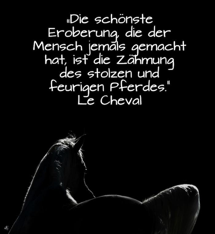 schlnes pferdebild und ein pferdespruch, ein schwarzes pferd mit einem weißen schwanz und einer weißen mähne, pferdesprüche und pferdebilder, ein zitat von la cheval