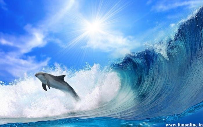 tolle delfine bilder, die ihnen sehr gut gefallen könnten - hier sind ein delfin, große wellen, blaues wasser und die sonne